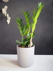 plante eternité